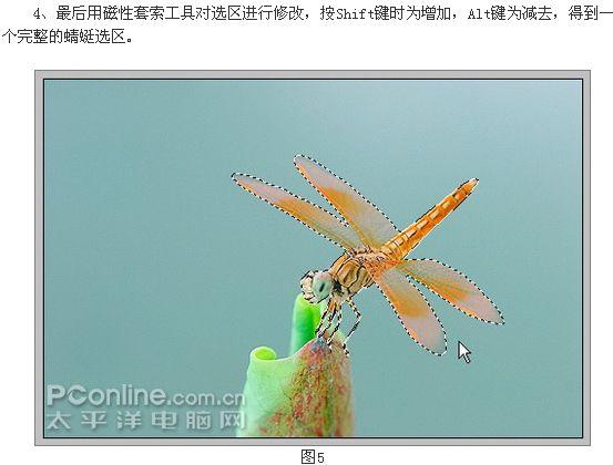 photoshopcs3制作蜻蜓戏荷花动画[中国photoshop资源