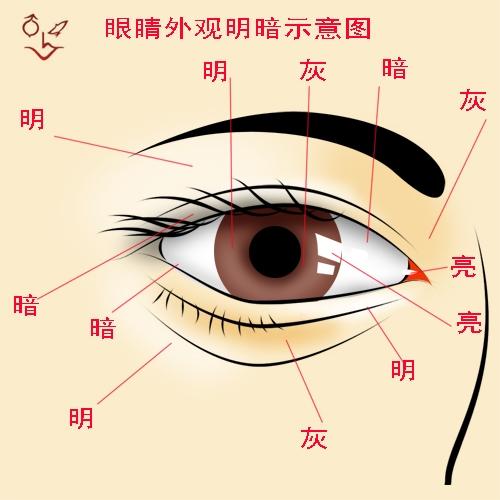 嘴唇皮肤结构图
