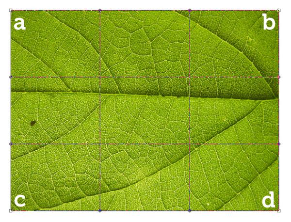 photoshop变形工具制作立体树叶子创意设计教程