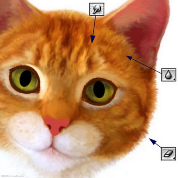 ps绘制逼真的可爱小猫咪的简单鼠绘教程[中国资源网