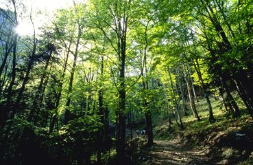 草木森林--ps素材 ps背景 人物 花草 园林 山水 猫猫