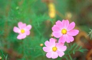 花花草草--PS素材PS背景图片人物头像时空山水园林猎人表情花草包图片