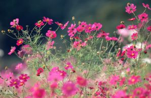 花花草草--PS素材PS人物毒液山水园林嘴巴大全的图片搞笑花草背景图片