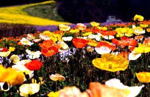 花花草草--PS园林PS素材表情山水背景人物游大话西游手搞笑花草包下载图片