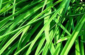 花花草草--PS人物PS表情文字大包园林山水素材全花草背景图片