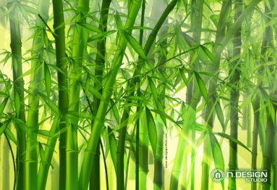 漂亮的中国传统手绘竹子图片背景素材(8p)