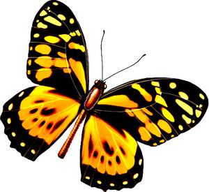 后期装饰常用的免抠图png格式蝴蝶图片素材53p