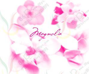 木兰花朵装饰画笔.4支-PS资源 PS资源 婚纱模板,儿童模板,台历