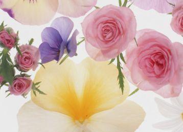 五彩花瓣背景素材图片   玫瑰花背景高清素材图片   漂亮的红色花朵