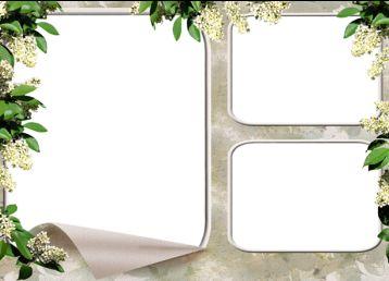 植物装饰全家福相框素材图片.png