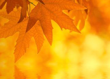 绿色枫叶水面倒影虚化背景素材高清图片下载