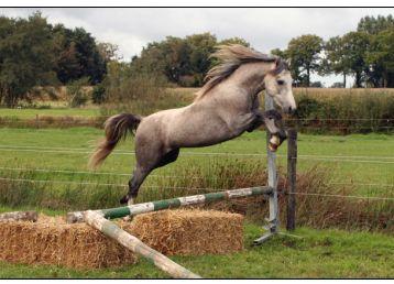 跳起来的马动物素材图片