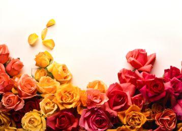 透明盒里装的红玫瑰花朵素材高清图片下载