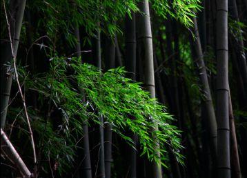 幽暗的迷雾公园树林风景素材高清图片下载