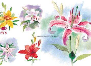 5张水彩百合花素材图片