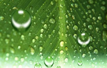 已抠好的各式各样的水滴高清图片素材7.psd