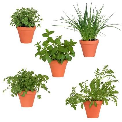 盆景/盆栽植物设计素材白底高清图片下载