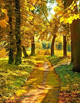 秋天金黄的树林小路风景高清图片下载