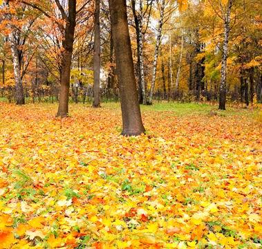 树林里金黄的落叶秋天风景高清图片下载