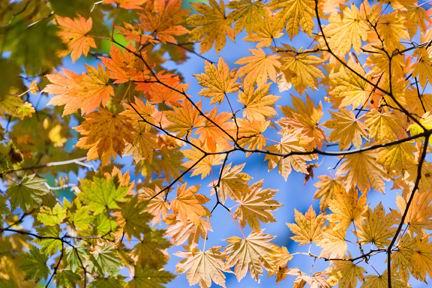 秋天的树叶风景素材高清图片下载