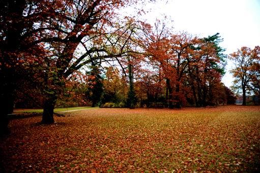 秋天树林满地金黄色落叶秋天风景图片高清素材下载1