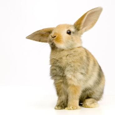 白底竖着耳朵的小兔子高清图片素材下载