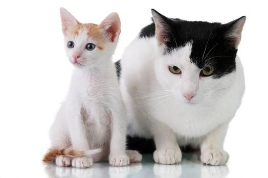 动物图片--高清图片 高清设计素材下载[中国