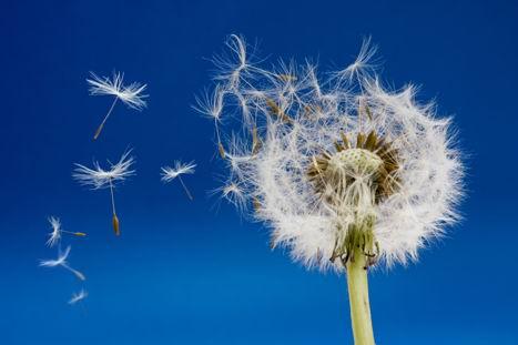 高清蓝天白云绿树红花展示