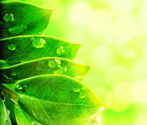清新植物嫩绿叶子水珠特写光晕背景高清大尺寸素材图片下载