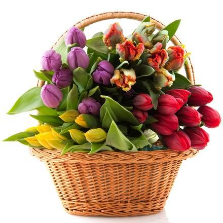 漂亮紫色小花素材高清图片素材下载 (06-14) 白底野菊花样本素材花