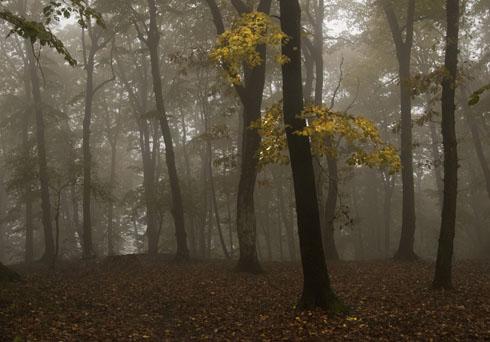 高清早晨有雾的树林图片素材下载
