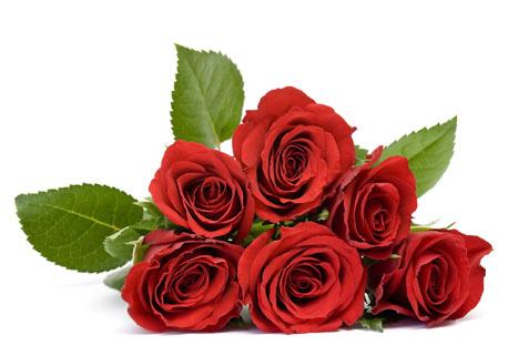 高清单支玫瑰花素材图片 25张 . 高清束状玫瑰花素材图片 41张 .