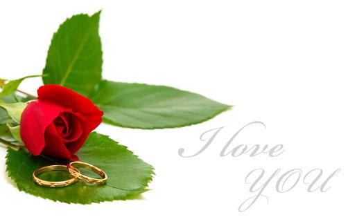 玫瑰花素材高清图片免费下载