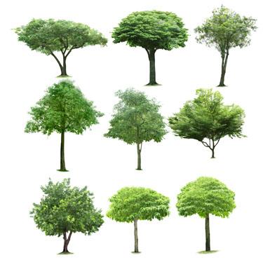树木素材高清图片免费下载