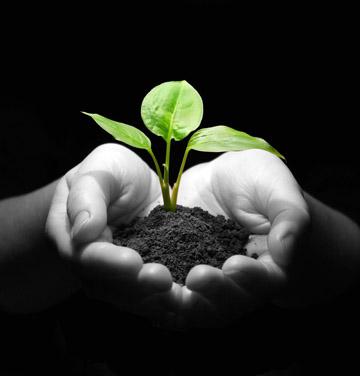 黑白双手捧着泥土植物环保素材高清图片下载-高清图片 高清设计素材
