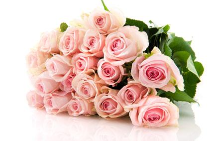 漂亮的粉色玫瑰花高清图片素材下载1