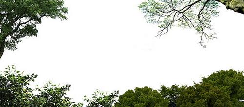 抠好的树木图片模板psd素材四园林后期效果图常用的