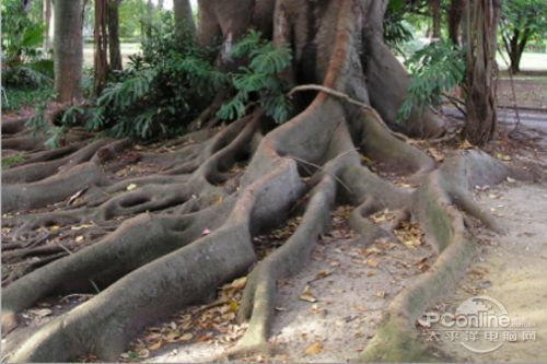 photoshop合成制作树根人体超自然蜕变场景教程