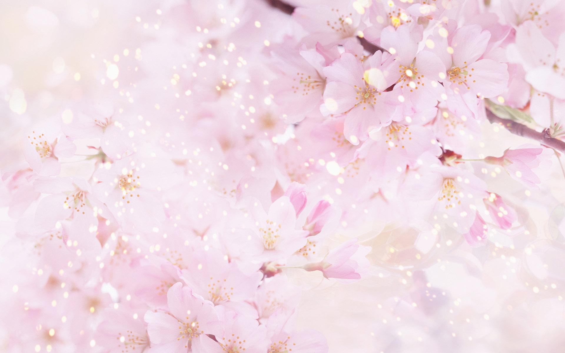 设计常用的花朵高清背景图片ps素材