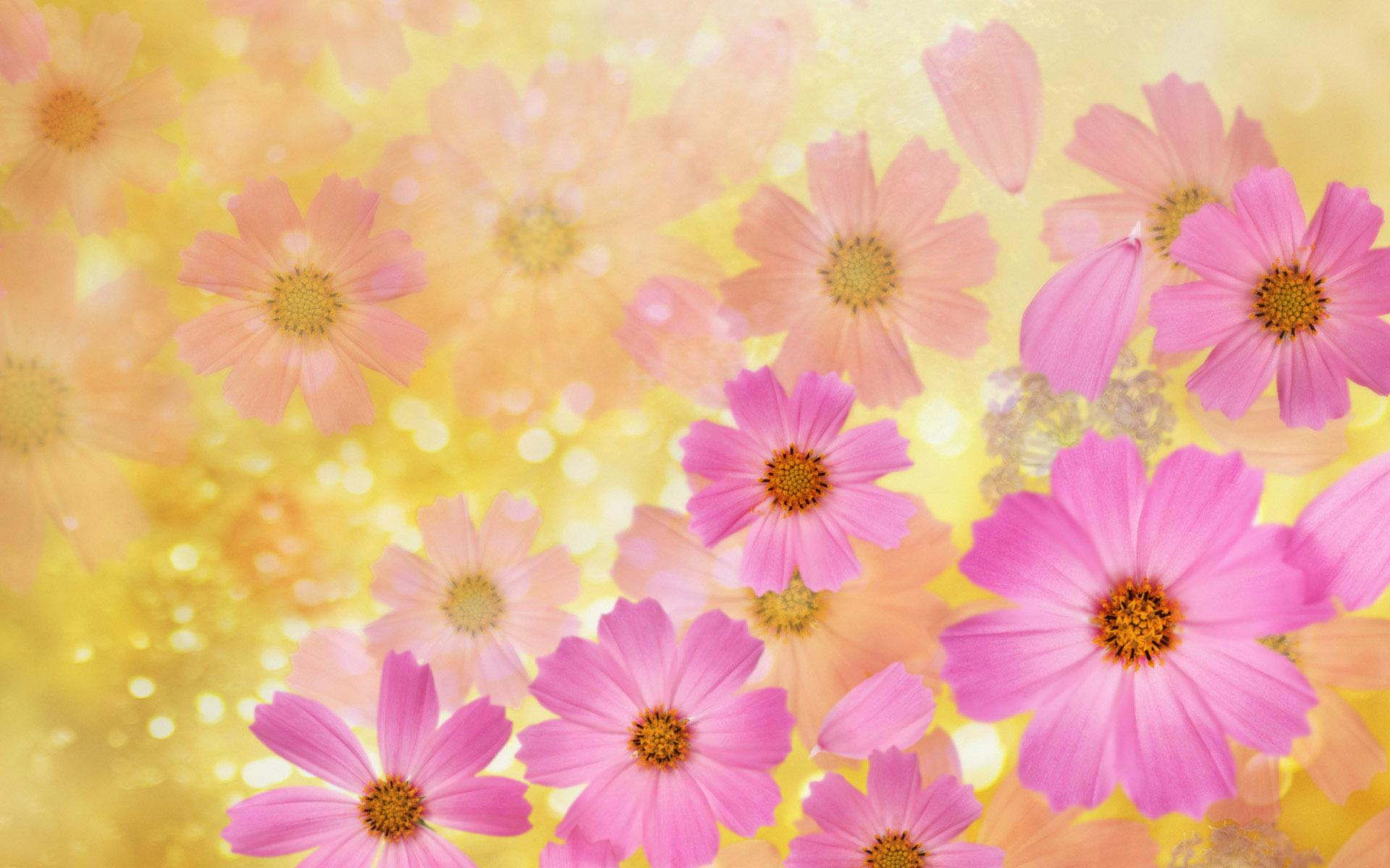 设计常用的花朵高清背景图片ps素材(32p)[中