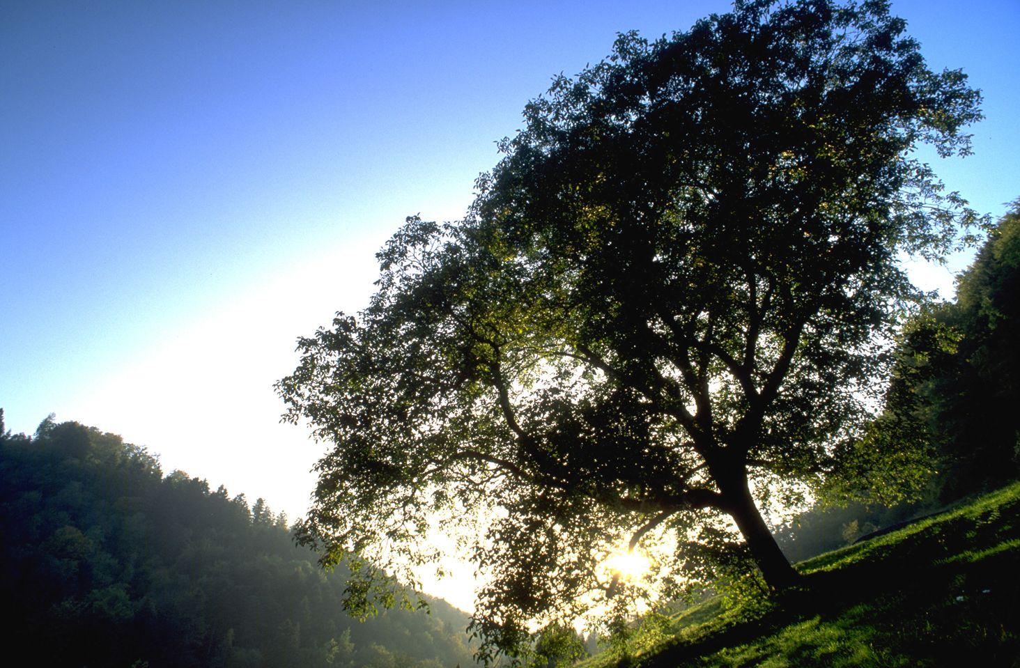 树木高清图片素材一(30p)[中国photoshop资源网ps