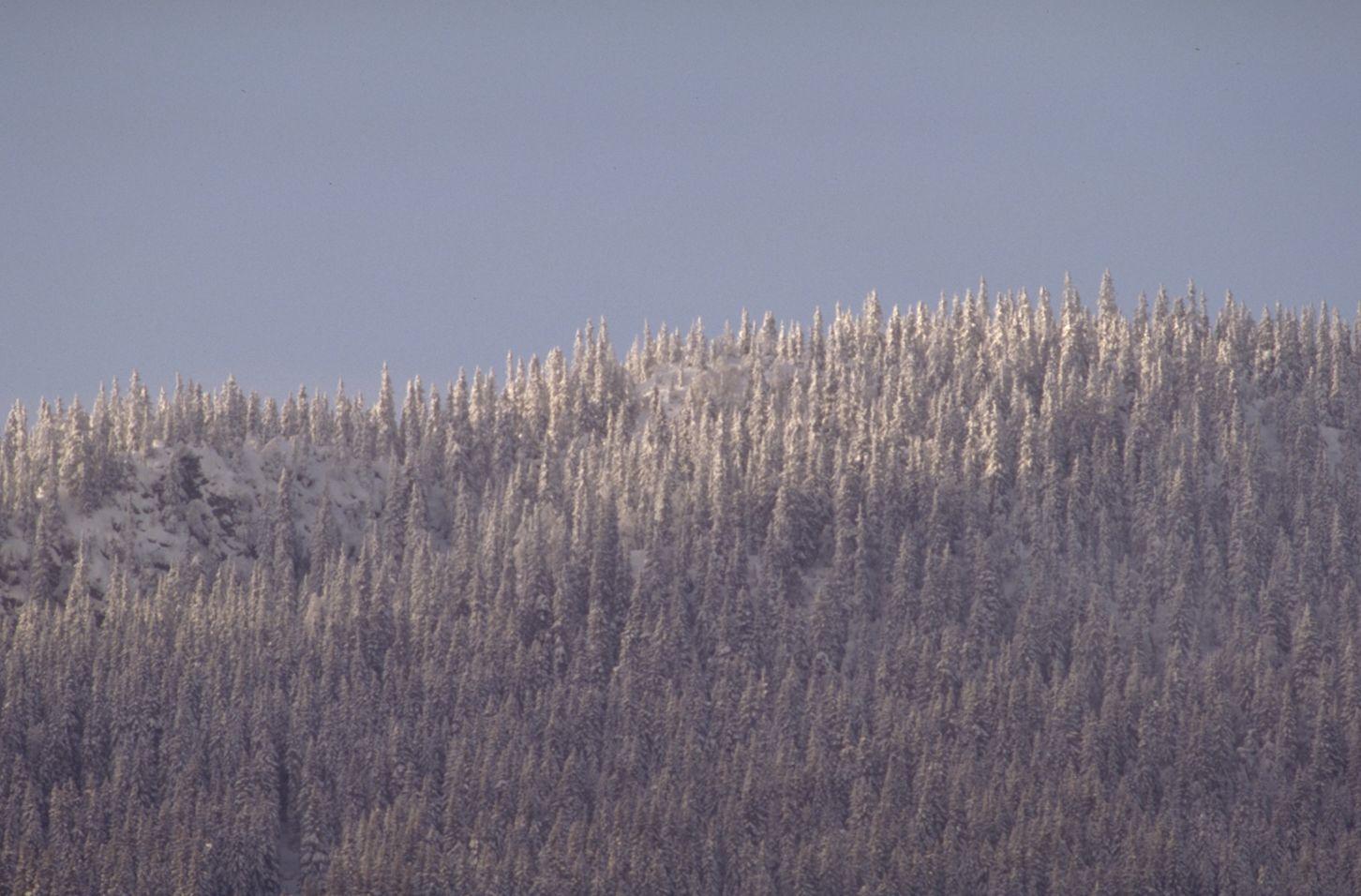 树木高清图片素材一(30p)[中国photoshop资源网|ps