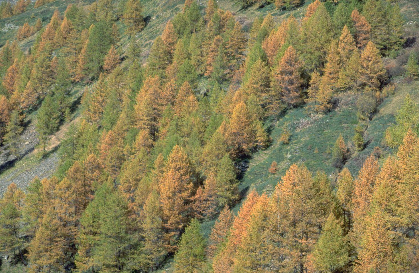 树木高清图片素材二(30p)[中国photoshop资源网|ps