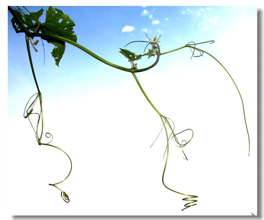藤蔓植物ps素材藤蔓植物藤条ps素材