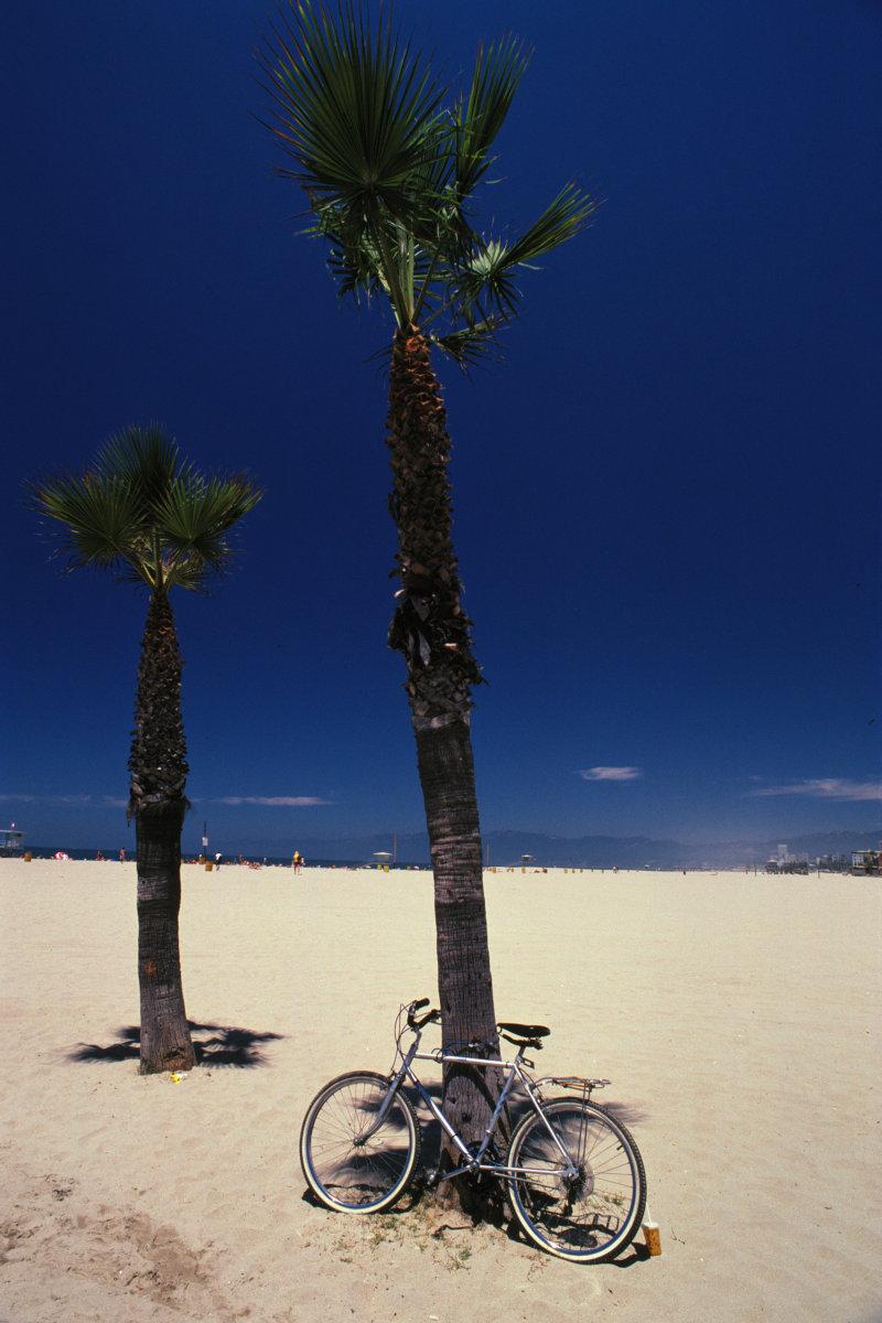 高清图片 风景图片 流水沙滩 >> 图片信息  阳光照耀下的大小两棵椰树
