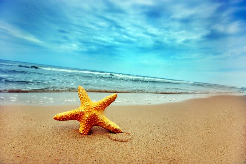 海螺贝壳海滩上的贝壳简笔画