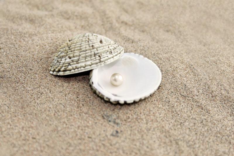 海边沙滩上的贝壳海星太阳伞椰树等热带风情图片素材
