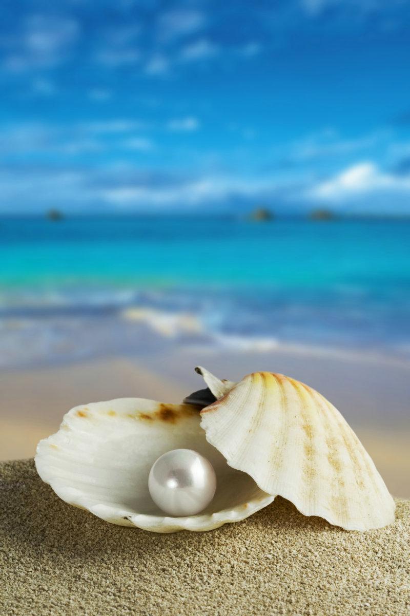 唯美 珍珠/带有很大一颗珍珠的白色贝壳高清图片下载...
