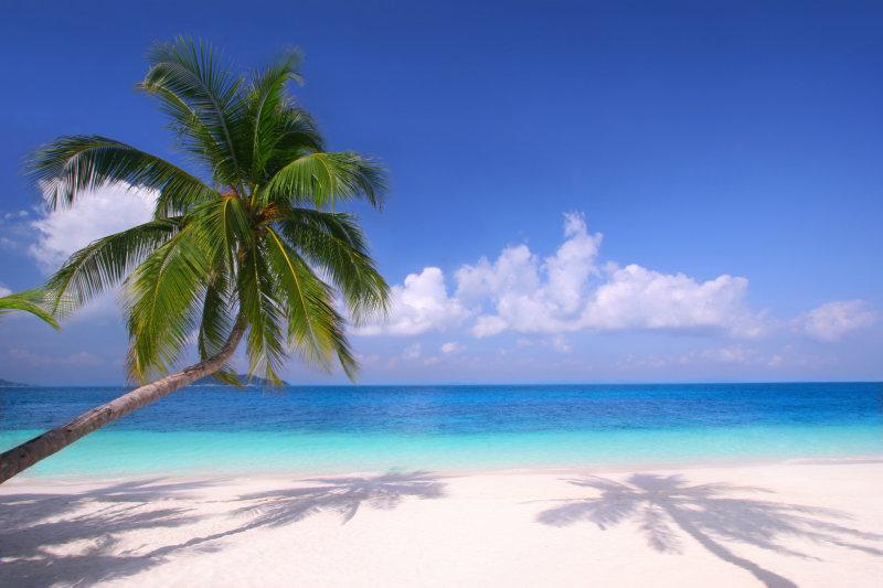 海边沙滩上的热i带灌木棕榈树等图片素材(32p)