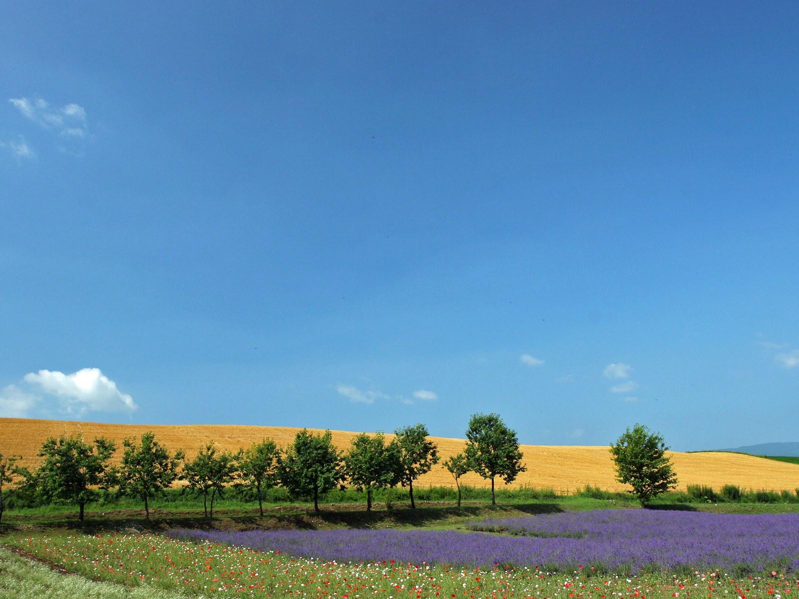 日本北海道田园风光图片PS素材 38P图片